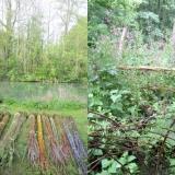 De-la-Plume-A-la-Bêche_Nid-Clématites_Jardin-Moulin-Jaune-3©DPAB