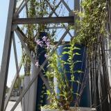De-la-Plume-A-la-Bêche_Infrastructures végétales-facade_SIOM-4©DPAB