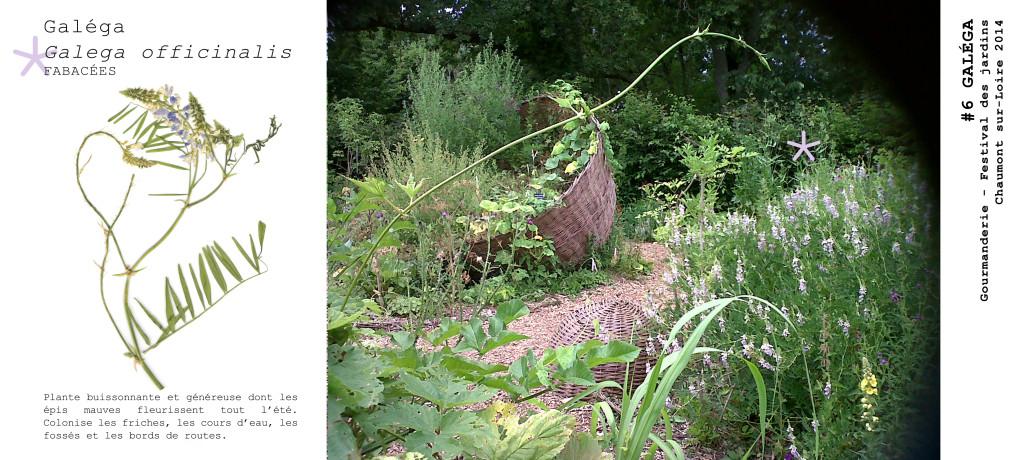 Herbier Gourmanderie Festival Jardins Chaumont sur Loire 2014 Sarah Sellam